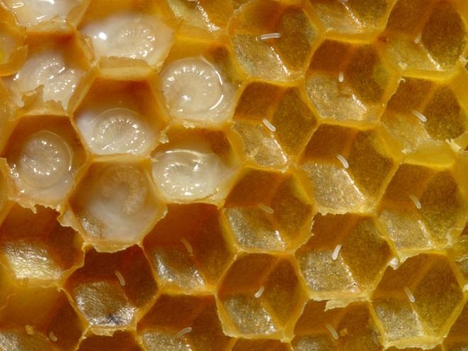 Соты с пчелиным медом