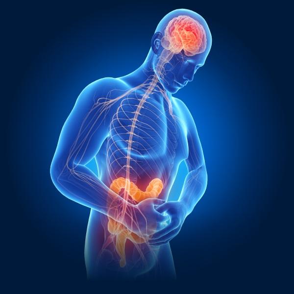 Связь между желудком и мозгом